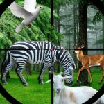 Real Jungle Animals Hunting